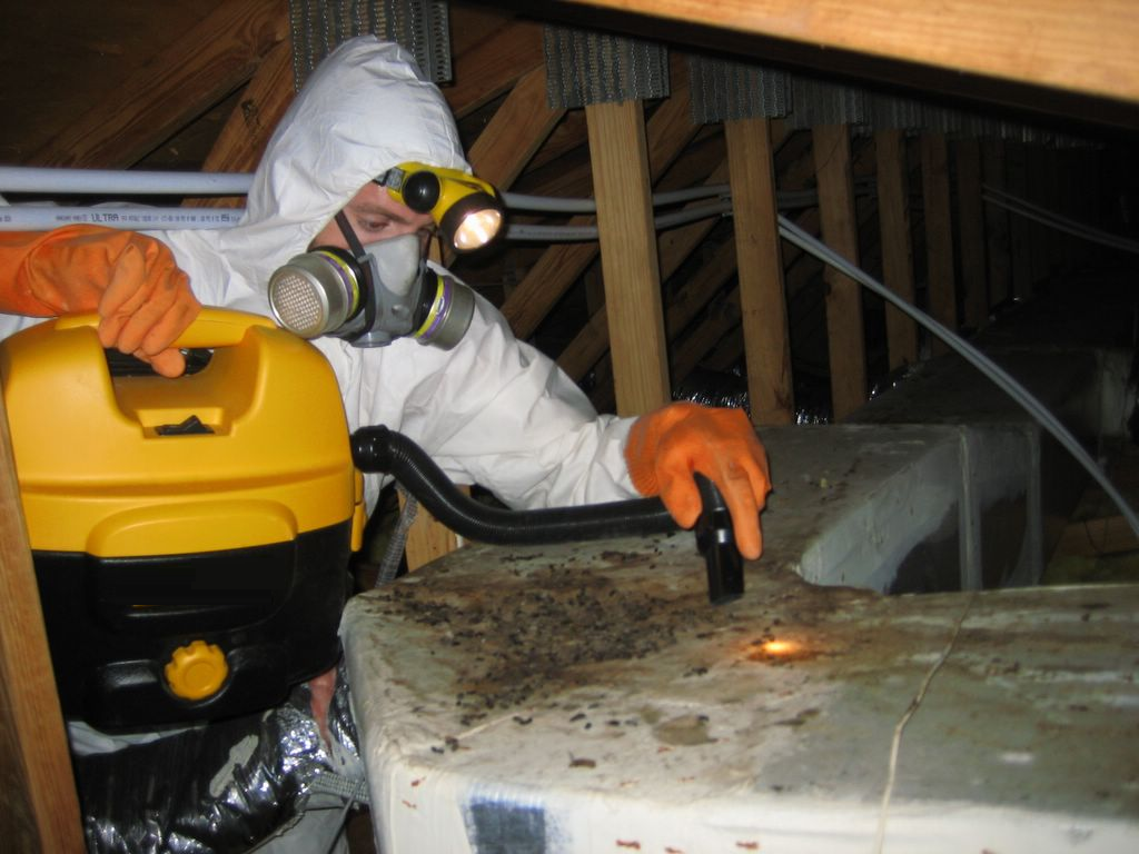 Exterminators – Exactly What Do They Are Doing?