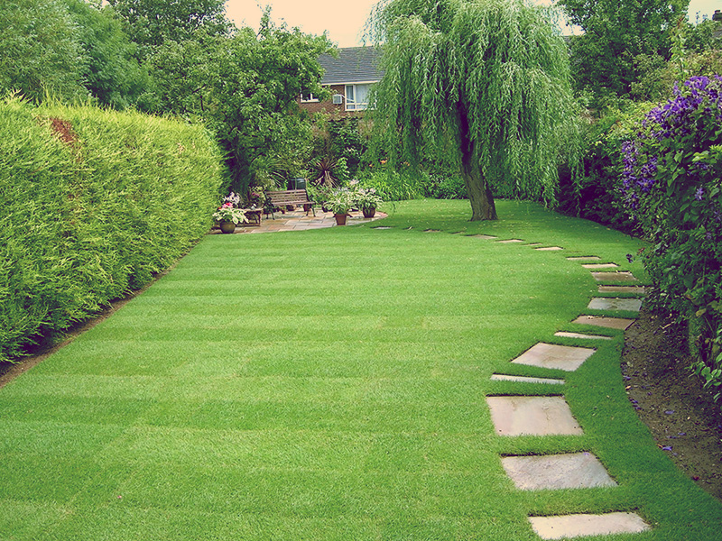 Things to consider When Purchasing the very best Garden Turf